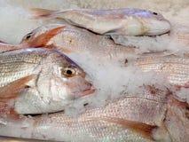 Het aanbieden van verse vissen koelde met verpletterd ijs Royalty-vrije Stock Afbeelding