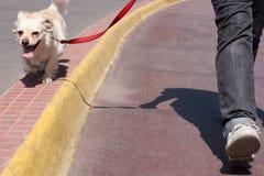 Het aanstoten met een hond Stock Foto