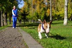 Het aanstoten met hond Royalty-vrije Stock Afbeelding