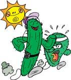 Het Aanstoten van de cactus Stock Afbeelding