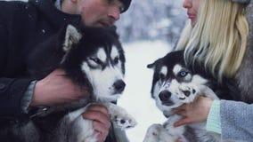 Het aantrekkelijke jonge paar houdt en koestert twee mooie Siberische huskies en bespreekt iets bij sneeuw de winter boshonden stock videobeelden
