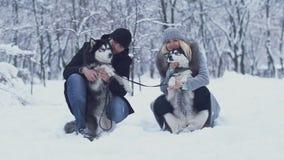 Het aantrekkelijke jonge paar houdt en koestert twee mooie Siberische huskies en krast hun pluizige buiken Honden op a stock video