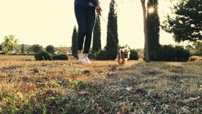 Het aantrekkelijke meisje loopt met haar terriër van Yorkshire in het park bij zonsondergang stock footage