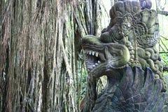 In het Aapbos van Bali Stock Afbeeldingen
