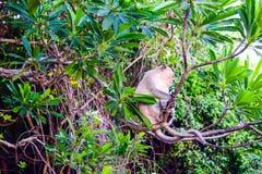Het aapeiland in Cat Ba, Ha snakt Baai in het silhouet van Vietnam Stock Foto