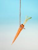 Het aas van de wortel op een koord stock fotografie