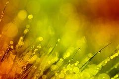 Het abstracte achtergronddauw warme stemmen Royalty-vrije Stock Afbeeldingen
