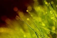 Het abstracte achtergrondochtenddauw warme stemmen Stock Afbeeldingen