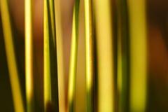 Het abstracte Gras van de Piek Royalty-vrije Stock Foto's