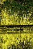 Het abstracte moerasland van Florida toneel in levendige valse kleuren Stock Afbeeldingen