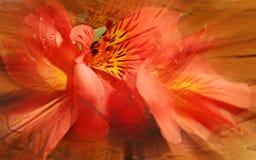 Het Abstracte Onduidelijke beeld van Fusia royalty-vrije stock afbeeldingen
