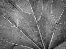 Het abstracte patroon van het bladspinneweb Stock Foto