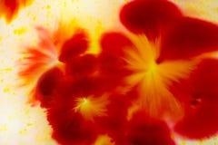 Het abstracte rode bloemconcept schilderen voor achtergrond, zacht en onduidelijk beeld Royalty-vrije Stock Afbeeldingen