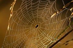 Het abstracte Web Royalty-vrije Stock Afbeelding