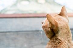 Het achtereind van oranje die kat op de vloer wordt geïsoleerd royalty-vrije stock foto