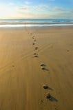 Het af:drukken van de hoef in het zand Royalty-vrije Stock Foto