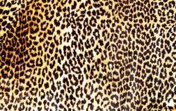 Het af:drukken van de luipaard Stock Afbeelding