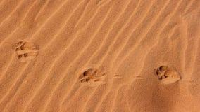 Het Af:drukken van de poot in het Zand royalty-vrije stock fotografie