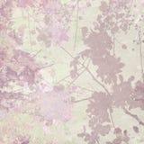 Het Af:drukken van het Silhouet van de bloem op de Achtergrond van de Pastelkleur Stock Fotografie