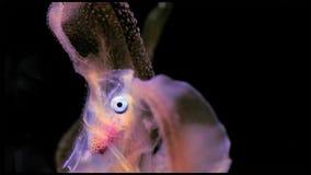 Het afdrijven de dieren worden genoemd dierlijk plankton dat in alllgrootte, uit uiterst kleine algen en bacteriën, andere embryo royalty-vrije stock foto's