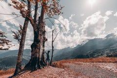 Het afrikaans-Amerikaanse jonge wijfje raakt een reusachtige boom, breed-angl-wijd stock fotografie