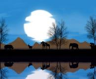 Het Afrikaanse dierlijke leven Stock Foto's