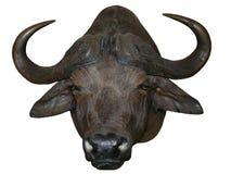 Het Afrikaanse Hoofd van Buffels Royalty-vrije Stock Afbeeldingen