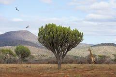 Het Afrikaanse landschapswild Royalty-vrije Stock Afbeeldingen