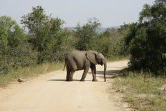 Het Afrikaanse Nationale Park van Olifantskruger royalty-vrije stock foto's