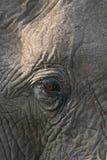 Het Afrikaanse oog van de Olifant Royalty-vrije Stock Fotografie