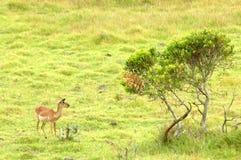 Het Afrikaanse wild royalty-vrije stock foto's