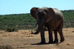 Het Afrikaanse wild stock foto's
