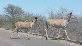Het Afrikaanse Wild royalty-vrije stock fotografie