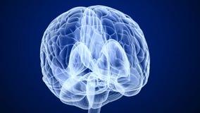 Het aftasten van hersenen, Röntgenstraal royalty-vrije illustratie