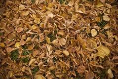 Het afwerpen van bladeren royalty-vrije stock afbeeldingen