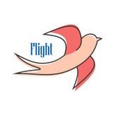 Het alerte roze slikt tijdens de vlucht Stock Fotografie