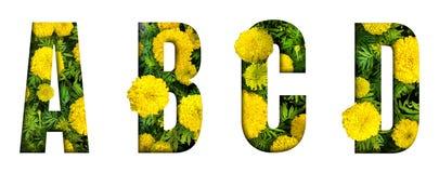 Het alfabet A, B, C, D maakte van de doopvont van de goudsbloembloem die op witte achtergrond wordt geïsoleerd Mooi karakterconce stock afbeeldingen