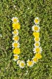 Het alfabet van de brievenu bloem Royalty-vrije Stock Afbeeldingen