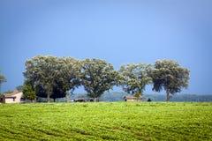 Het Amerikaanse Landschap van het Land Stock Afbeelding