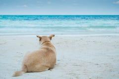 Het anticiperen van een hond op het strand royalty-vrije stock foto's