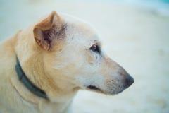 Het anticiperen van een hond op het strand royalty-vrije stock afbeeldingen