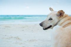 Het anticiperen van een hond op het strand stock afbeelding
