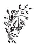 het antieke bloemen graveren (vector) Royalty-vrije Stock Afbeelding