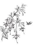 Het antieke bloemen graveren (vector) Royalty-vrije Stock Foto