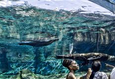 Het Aquarium Royalty-vrije Stock Afbeelding