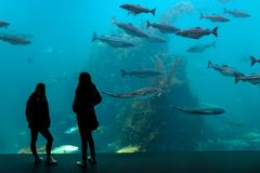 Het Aquarium in Alesund, Noorwegen royalty-vrije stock foto's