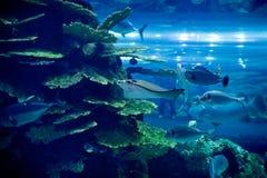 Het aquarium in Doubai Stock Foto's