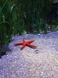 Het aquarium in Valencia Stock Afbeeldingen