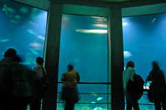 Het Aquarium van Baltimore Stock Foto's