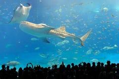 Het aquarium van Churaumi stock fotografie